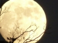 La luna y el conejo